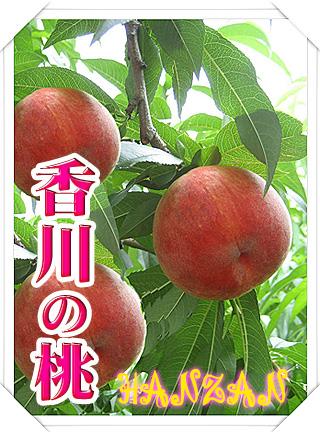 香川の桃!白桃