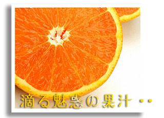 香川産!曽保みかん産地直送便1